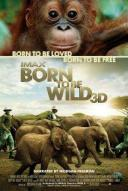 Affiche du film Born to Be Wild 3D